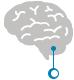 new-brain